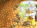 Bee Hive IN001