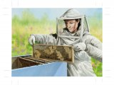 Bee Keeper opening hive IN009