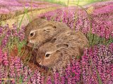 Brown Hare Leverit (Lepus europaeus) M005