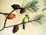 MU028 - Scotish Crossbills painting in the Duart carriage