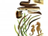 F059 - Eels, Pipefish & Seahorses complete spread