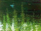 Blue Kingfisher Green Water (print on canvas 55x70cm) B003