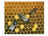 Honeycomb with Worker, Drone and Queen Bees IN012