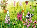 Orchid Meadow CG001