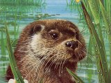 Otter (Lutra lutra) M007