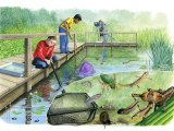 Pond Dipping CG001