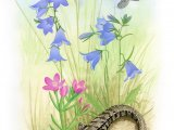 Sand Dune Flora and Fauna CG001