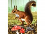 Squirrel (Red) Sciurus vulgaris M001