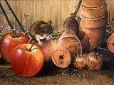 Wood Mice in Potting Shed M005
