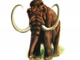 P034 - Wooly Mammoth (Mammuthus primigenius)