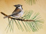 MU033 - Crested Tit painting in the Duart carriage