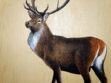 MU032 - Red Deer Stag painting on the ceiling of the Duart carriage