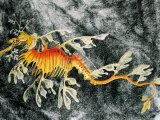 F170 - Sea Dragon (Phycodurus eques)